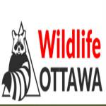 Wildlife Ottawa Profile Picture