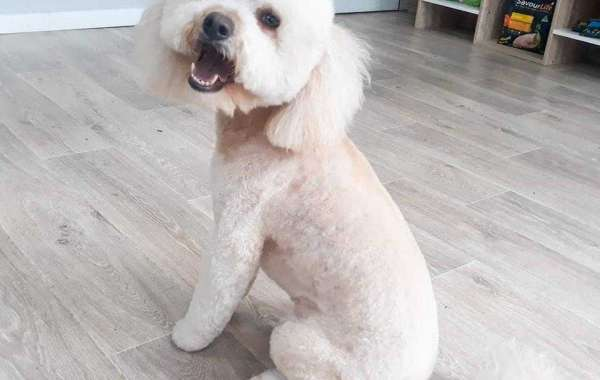 How to Find a Good Dog Groomer in Sydney?