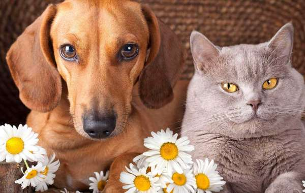 The Right Services for Your Dogs by Supportive Vets