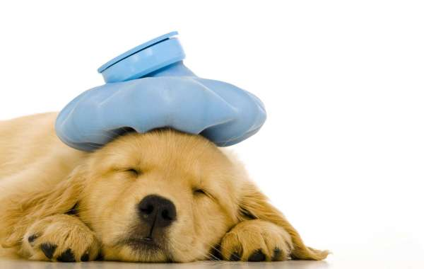 Improve Your Pet's Well-being with Tranquille Vet Animal Hospital