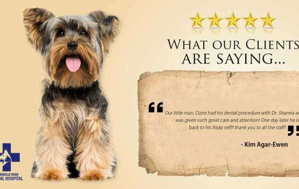 The Best Care for Your Lovely Dog