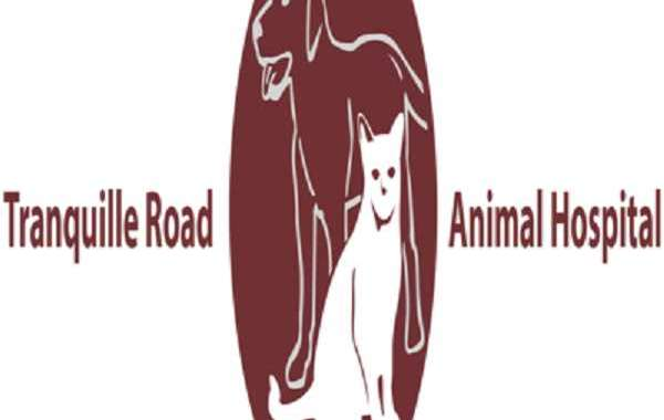 Ways to Promote The Virtual Veterinary Clinic