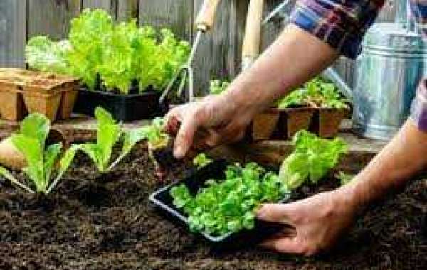 Healthy Growing: Tips, Tricks, And Techniques For Organic Gardening